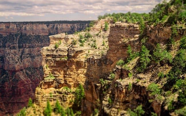 Pine Trees, South Rim, Grand Canyon