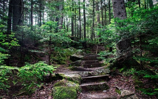 Stone Steps on Forest Path, Maine